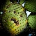 Dans leur sourir', il y a des cactus !